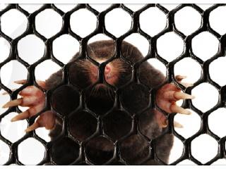 Siatki na krety (przeciw kretom) 1,00 x 50 mb - czarna