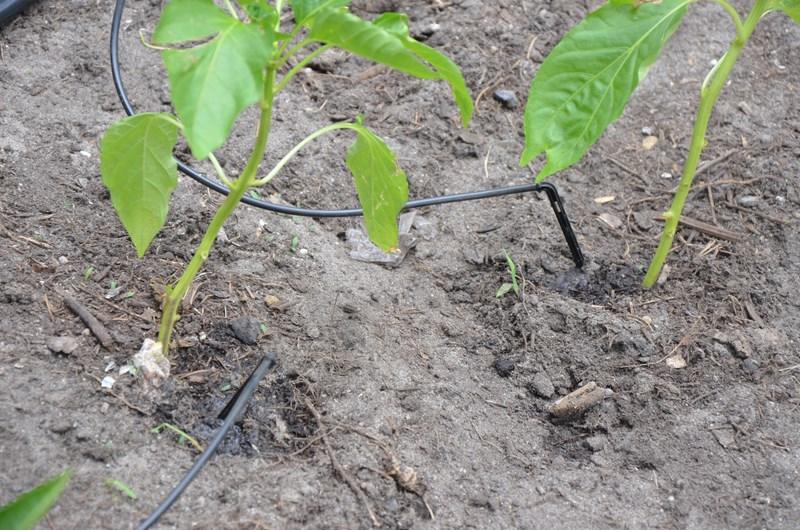 kropelkowy system nawadniania gleby - zastosowanie 2