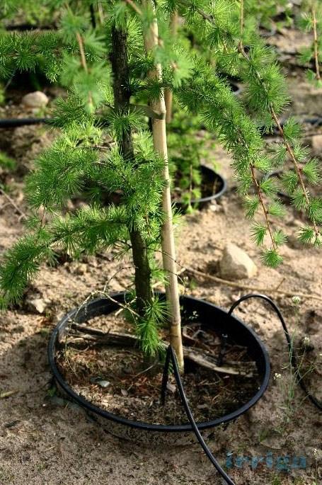 kropelkowy system nawadniania gleby - zastosowanie 18