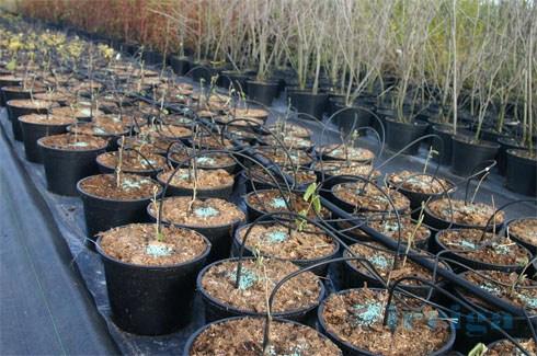 kropelkowy system nawadniania gleby - zastosowanie 19